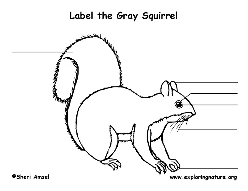 Squirrel (Gray) Labeling Page