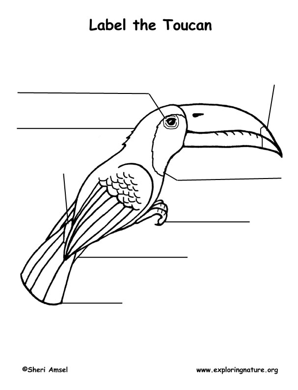 Toucan Labeling Page