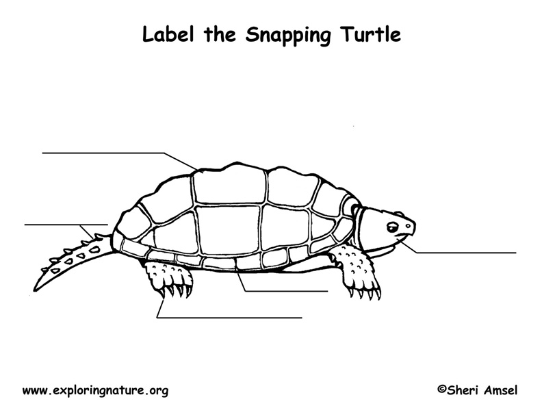 Turtle (Snapping) Labeling Page