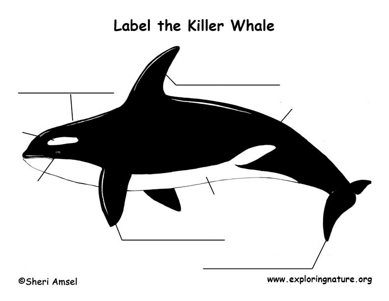 Whale Killer Labeling Page