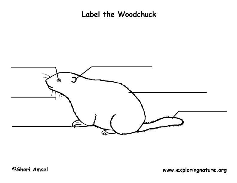 Woodchuck Labeling Page