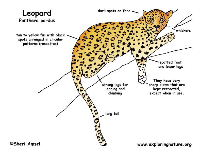 Leopard Seal Life Cycle - Best Leopard 2017