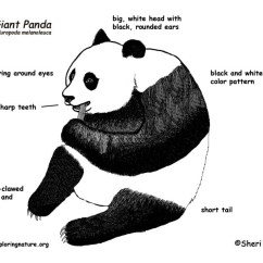 Panda Bear Diagram 30ampere Ladestecker Giant Classification