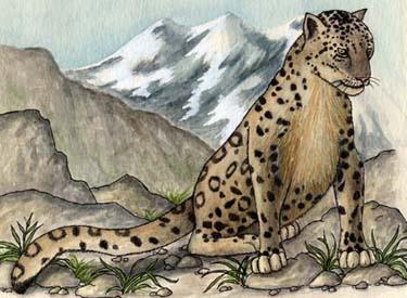 snow leopard anatomy diagram 2004 jeep grand cherokee window wiring range the