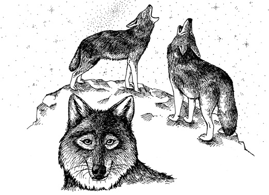 timber wolf facts and its habbitat