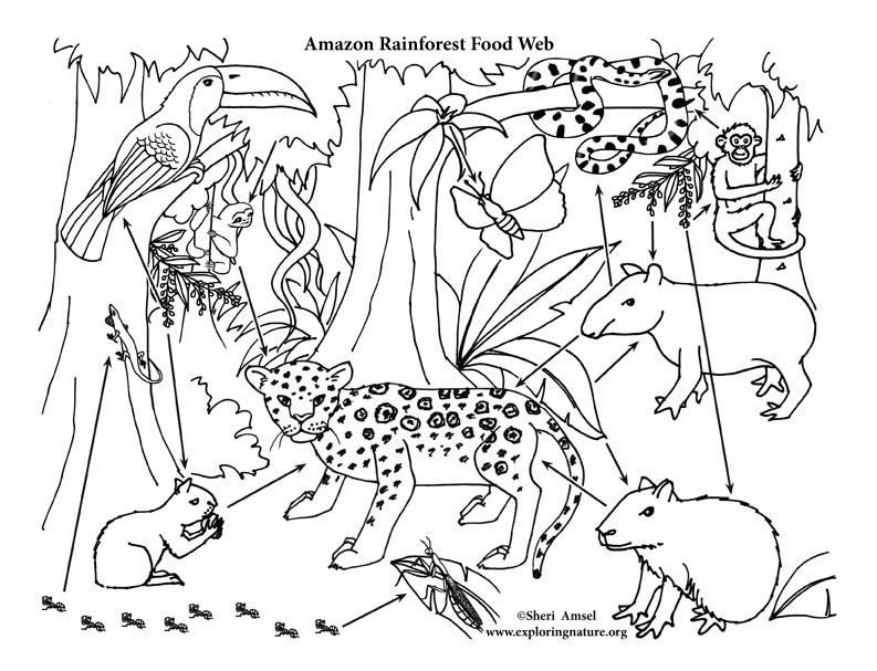 Amazon Rainforest Mural