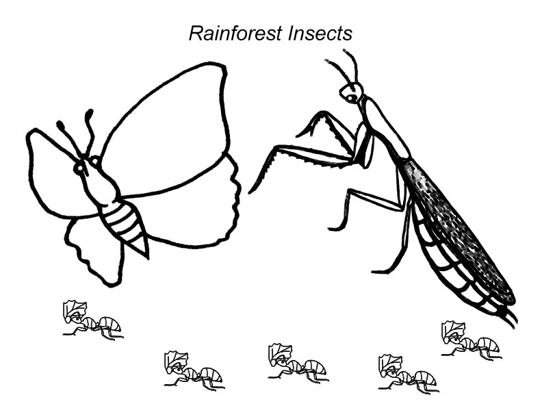 Amazon Rainforest Insects