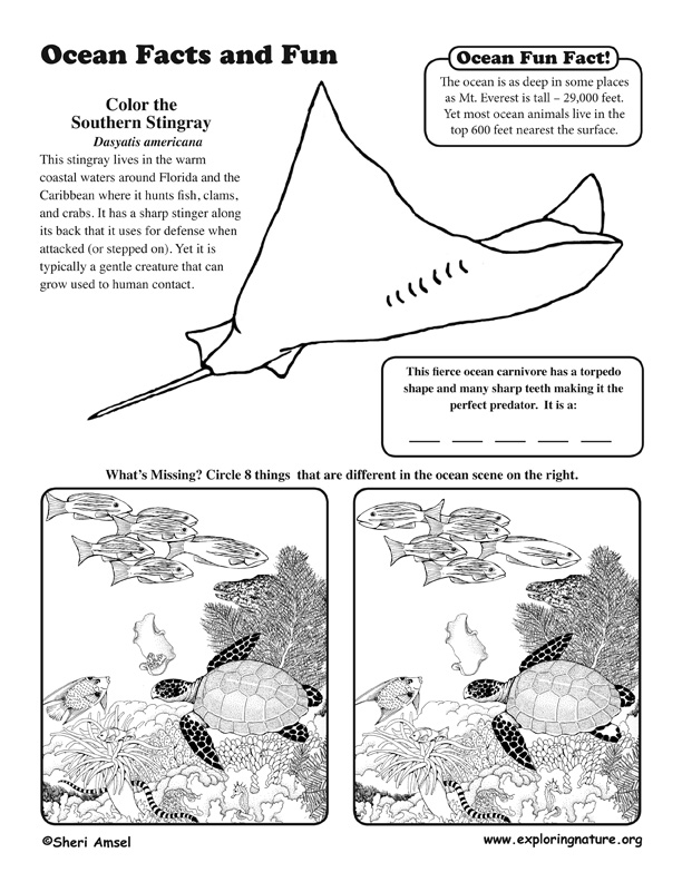 Oceans Activity Sheet