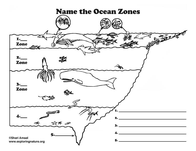 Ocean Zones Labeling (Elementary)