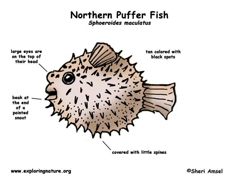 ocean floor diagram drawing nuclear power plant puffer fish (northern)