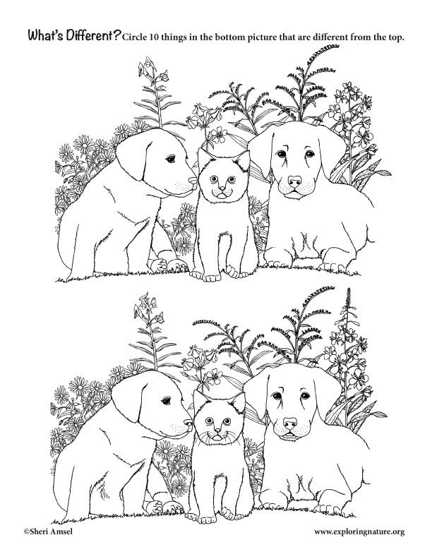 Whats Different? Cat and Dogs (Observational Activity)
