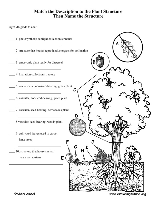 Printables. Plant Adaptations Worksheet. Mywcct Thousands