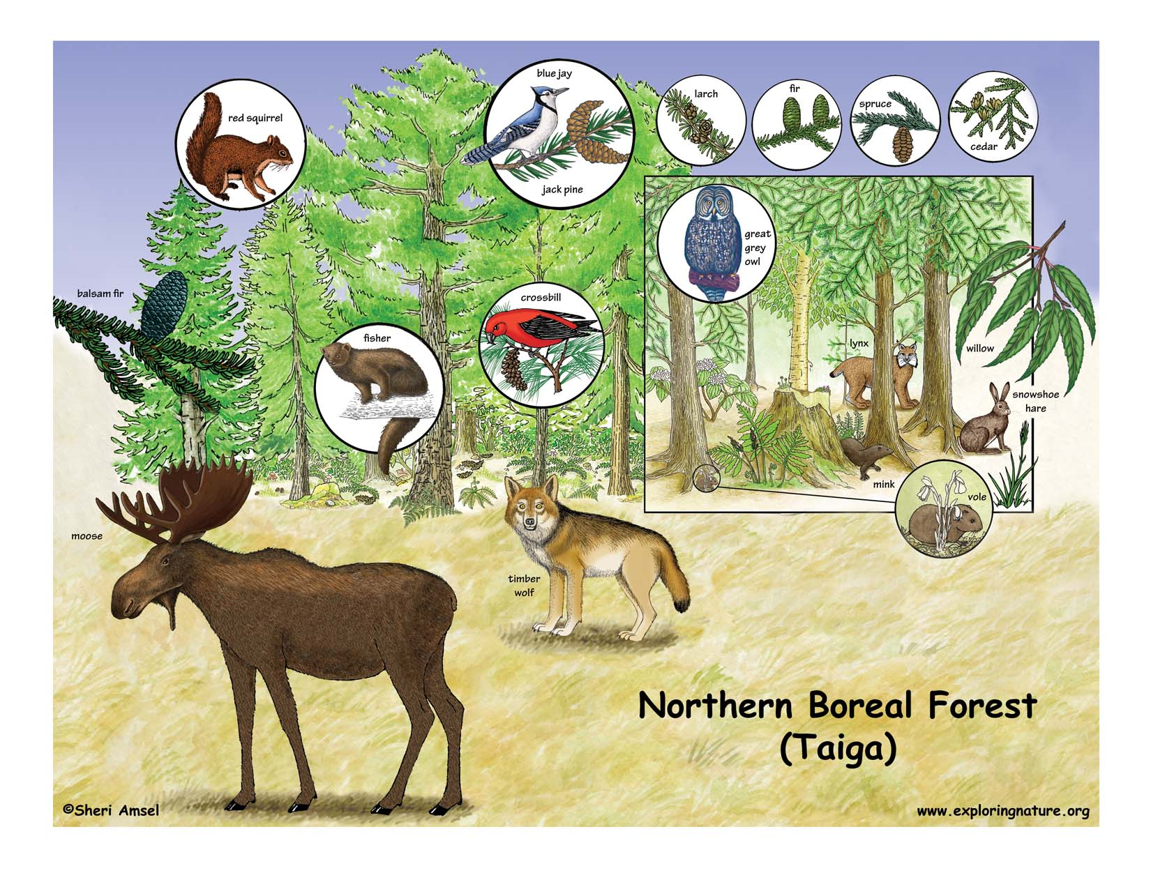 Boreal Forest Poster
