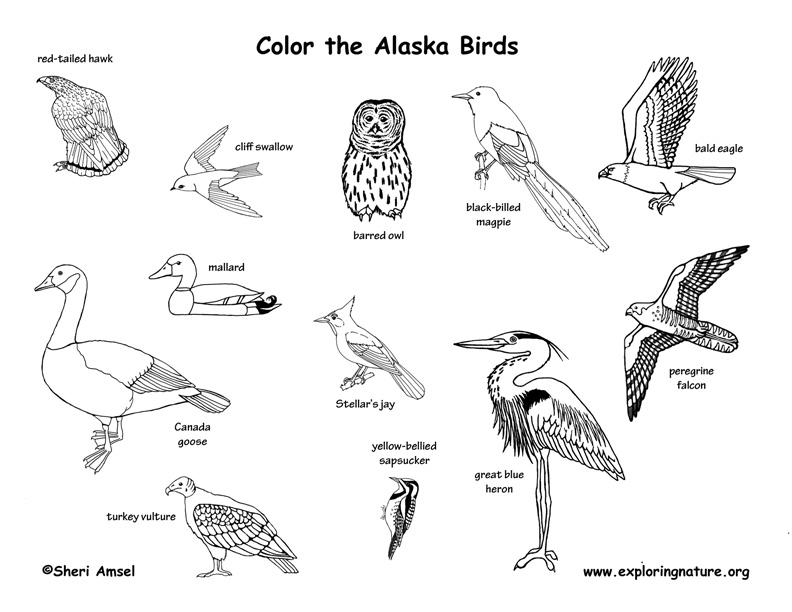 alaska habitats mammals birds amphibians reptiles