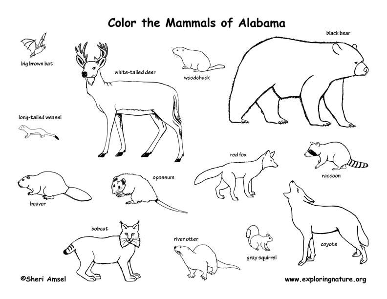 Alabama Habitats, Mammals, Birds, Amphibians, Reptiles