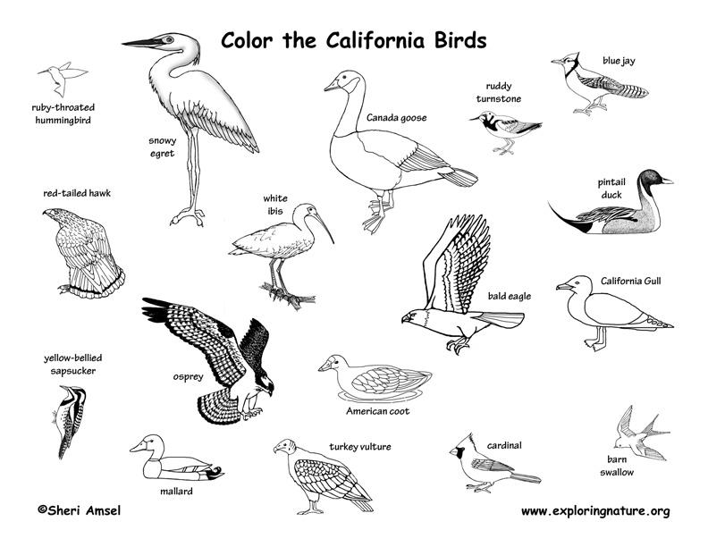 California Habitats, Mammals, Birds, Amphibians, Reptiles