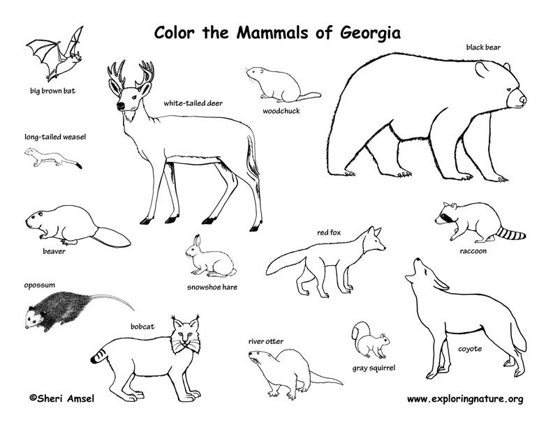 Georgia Habitats, Mammals, Birds, Amphibians, Reptiles