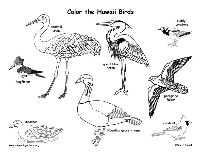 Hawaii Habitats, Mammals, Birds, Amphibians, Reptiles