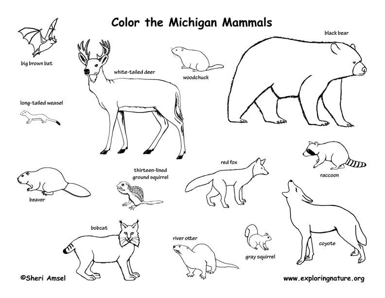 Michigan Habitats, Mammals, Birds, Amphibians, Reptiles