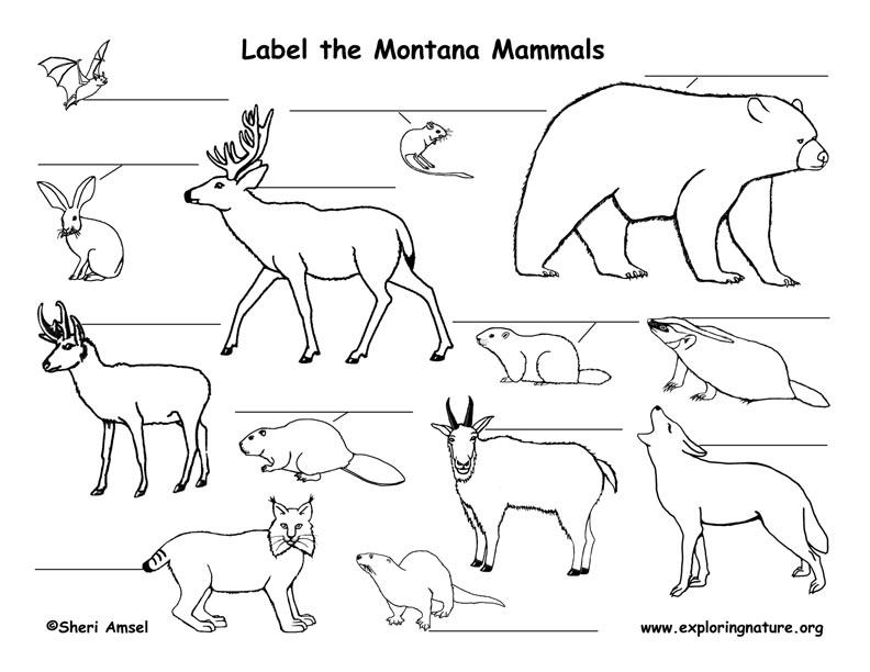 Montana Habitats, Mammals, Birds, Amphibians, Reptiles