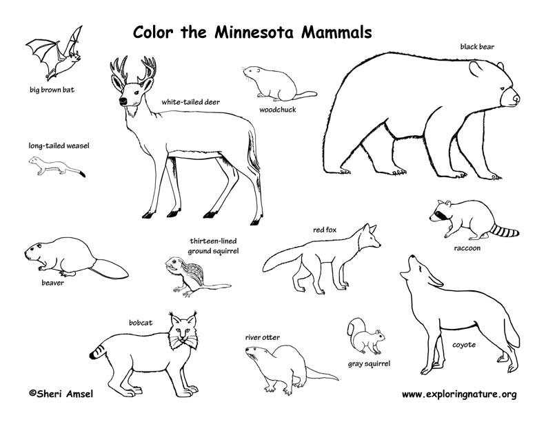 Minnesota Habitats, Mammals, Birds, Amphibians, Reptiles