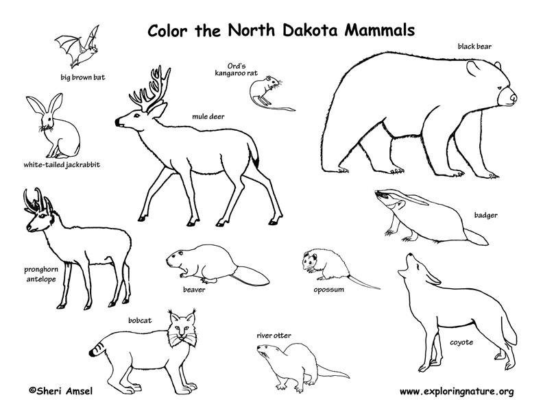 North Dakota Habitats, Mammals, Birds, Amphibians, Reptiles