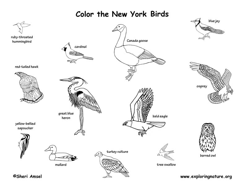 New York Habitats, Mammals, Birds, Amphibians, Reptiles