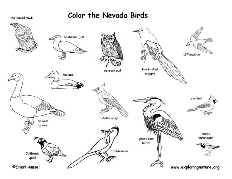 Nevada Habitats, Mammals, Birds, Amphibians, Reptiles
