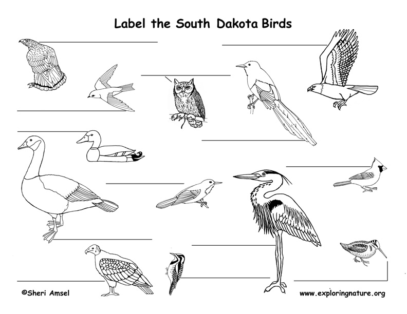 South Dakota birds