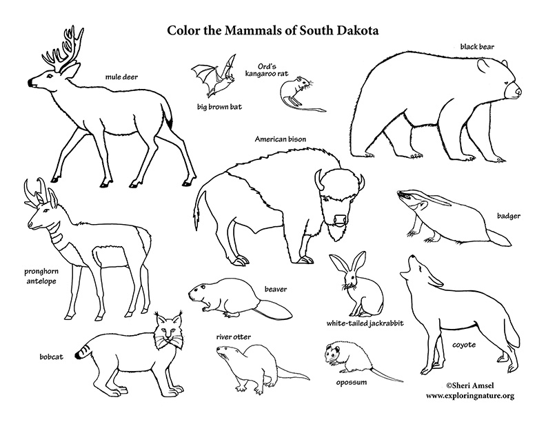 South Dakota Habitats, Mammals, Birds, Amphibians, Reptiles