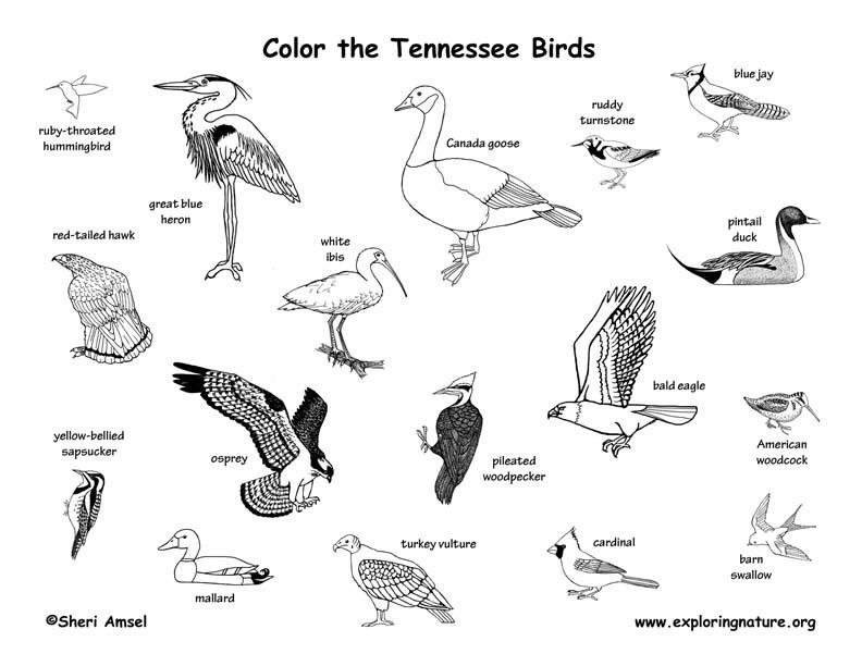 Tennessee Habitats, Mammals, Birds, Amphibians, Reptiles