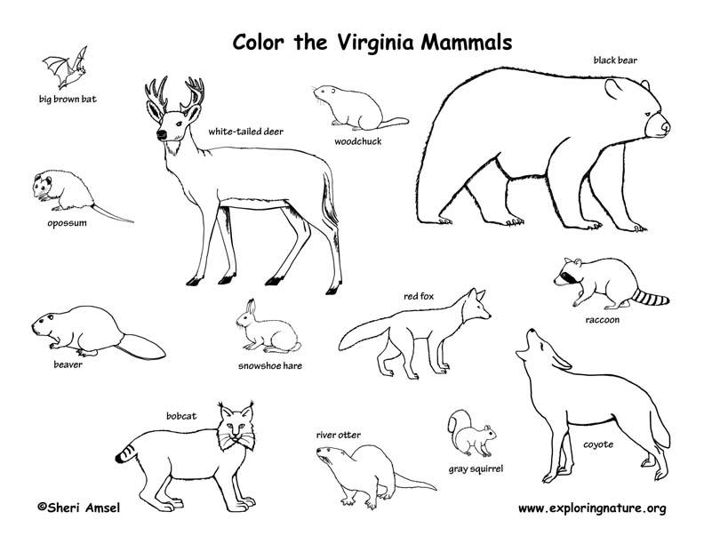 Virginia Habitats, Mammals, Birds, Amphibians, Reptiles
