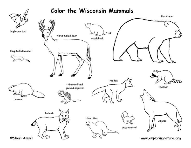 Wisconsin Habitats, Mammals, Birds, Amphibians, Reptiles