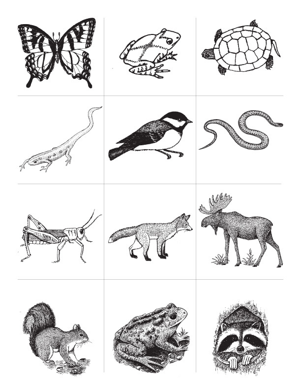 animal worksheet: NEW 618 ANIMAL KEYS WORKSHEET