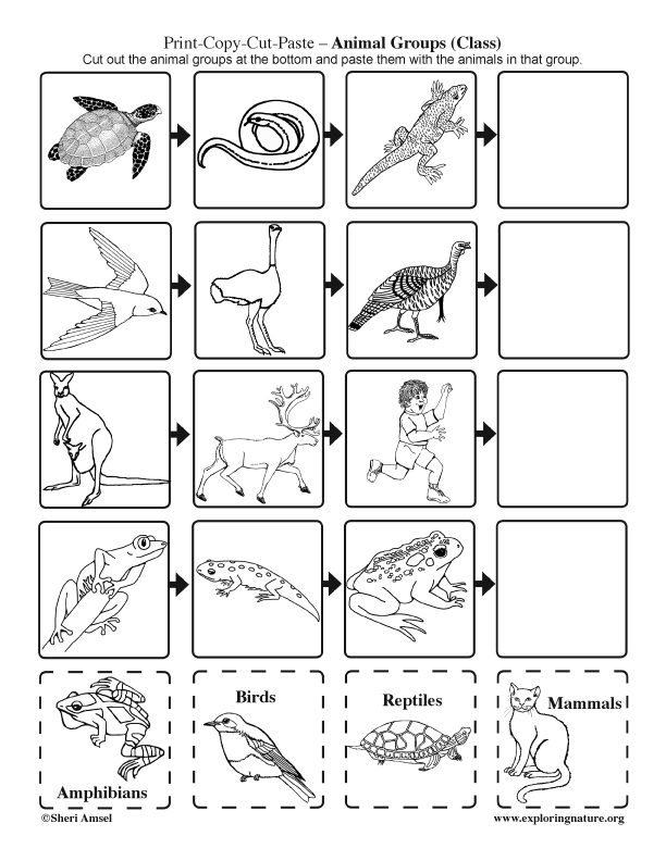 Animal Groups: Cut and Paste