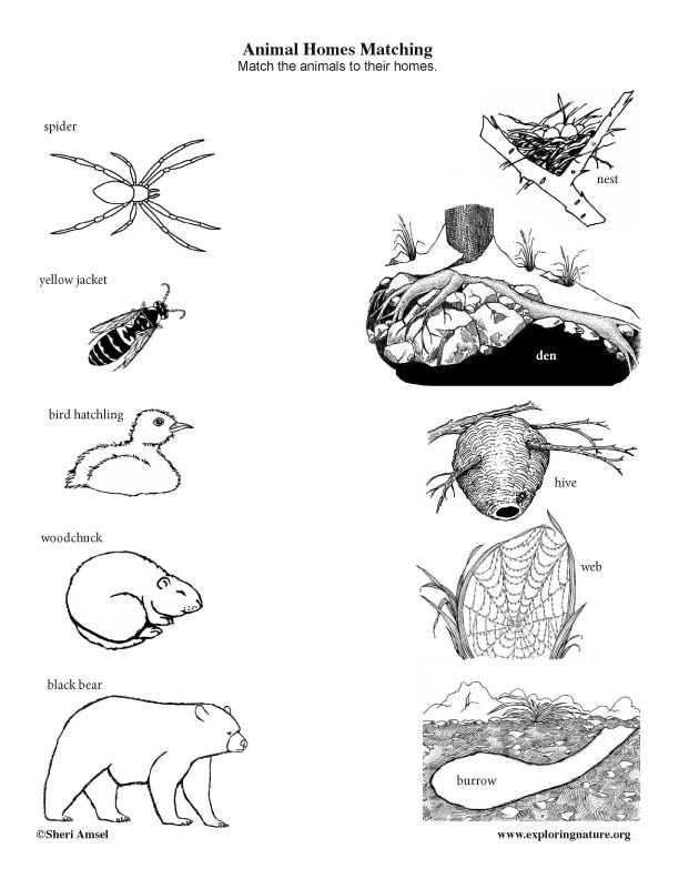 Animal Homes Matching (Black and White)