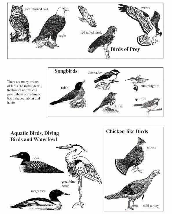 Bird Traits Lecture, Activity and Quiz