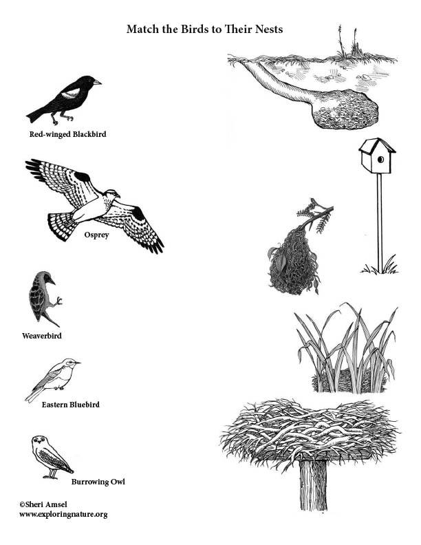 Match the Birds with Their Nests (Copy Ready)