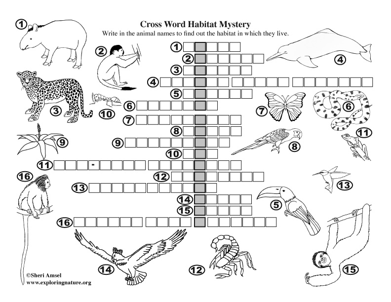 Habitat Mystery Crossword Puzzle (Amazon Rainforest)