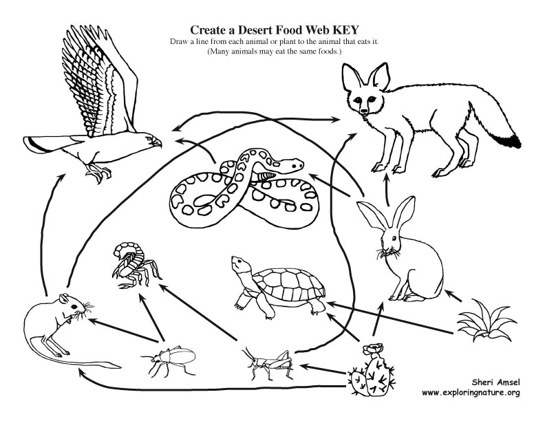 Free Coloring Pages Of Desert Food Web