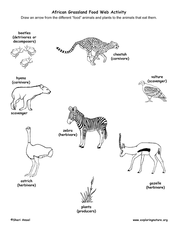 African Savannah Food Web Matching Activity