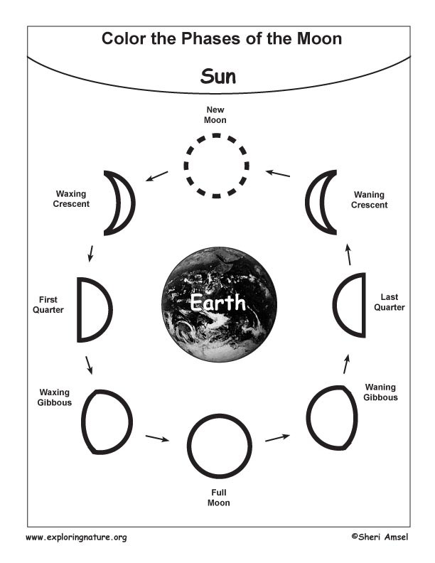 Blank Moon Phases Worksheet. phases of the moon. search