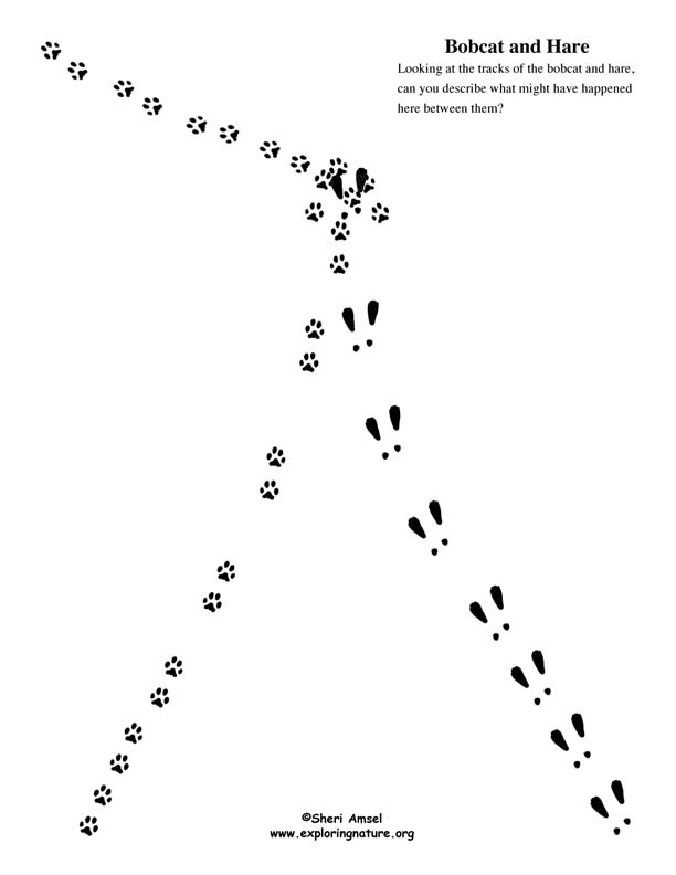 Animal Tracking Observation Vs Inference Activity