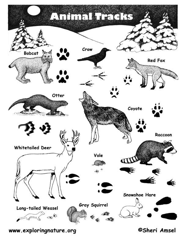 Animal Tracks Poster