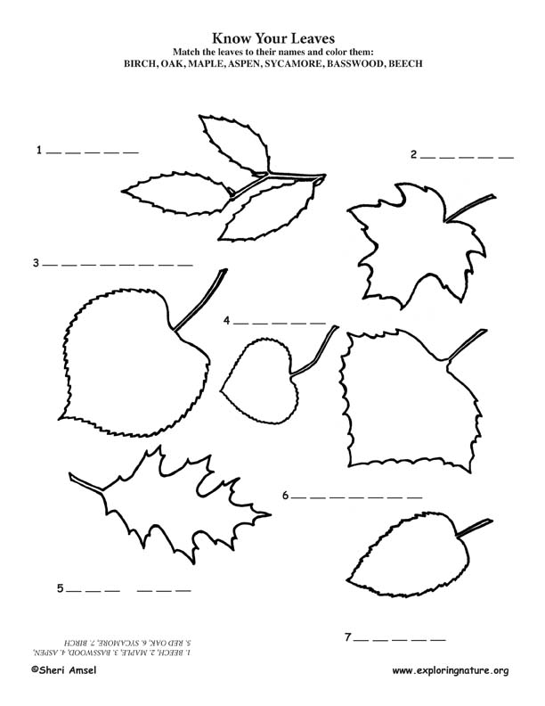 Blank Easel Coloring Page Coloring Coloring Pages