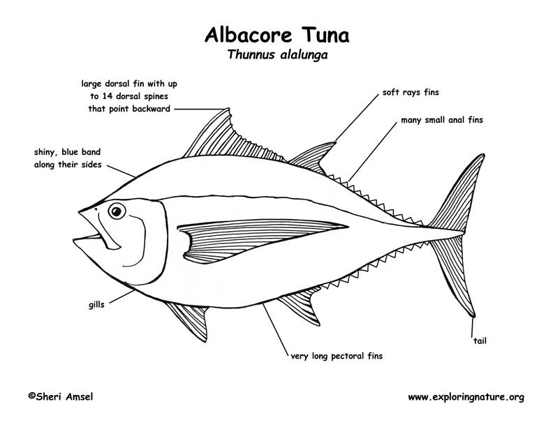 Tuna (Albacore) Labeling Page