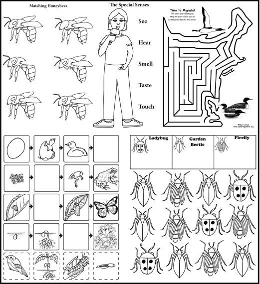 Preschool Science Activity Bundle