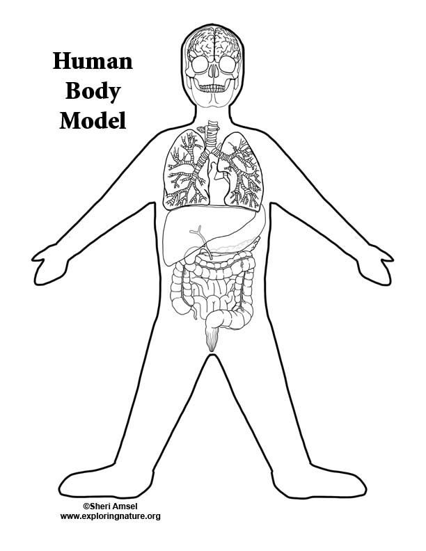 Build a Model (Mural) of the Human Body Bundle
