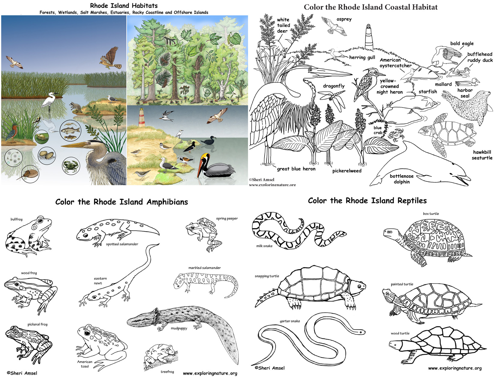Rhode Island S Animals And Habitats Bundle