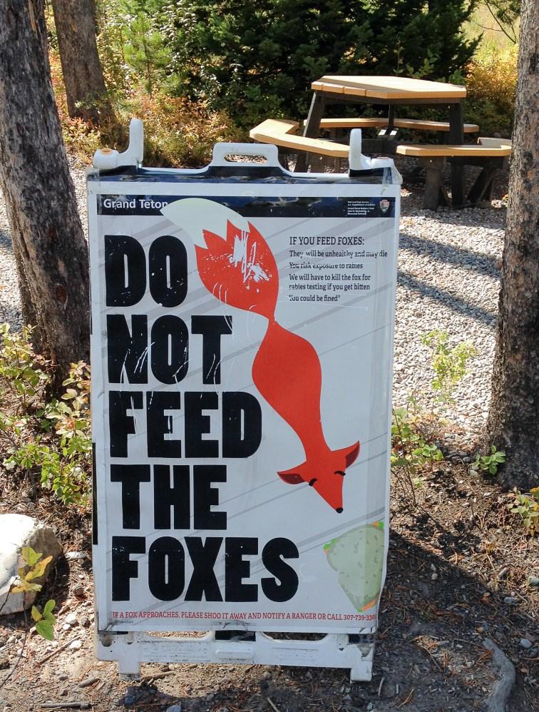 fox-1-9